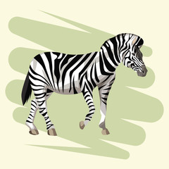 Beautiful zebra drawing vector illustration graphic design