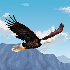 Eagle flying over landscape drawing vector illustration graphic design