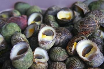 Deep sea shell