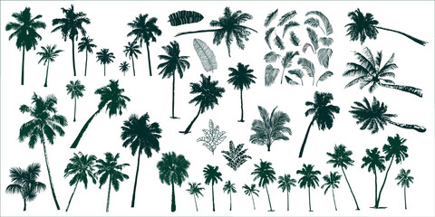 tropical palm trees Wall mural
