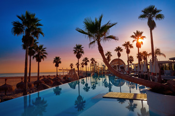 Wall Mural - Resort pool in a beach with palm trees sunrise