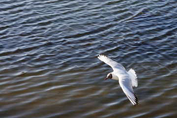 white seagull flying over the water