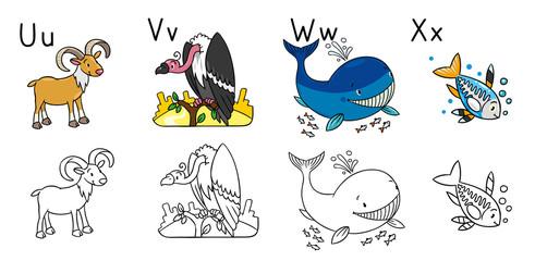 Animals alphabet coloring book. Letters U V W X