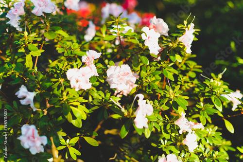 Krasivye Zhivye Cvety Belogo Cveta Na Zelenom Kust V