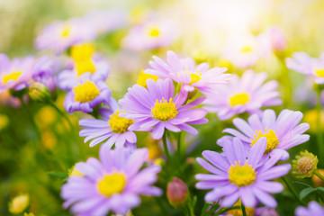 Beautiful daisy flowers on green meadow