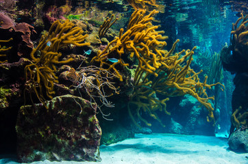 underwater coral reef landscape background in the blue sea