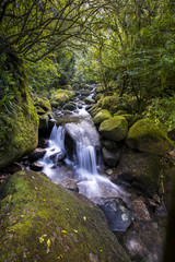 Water cascades down a stream from Wairere Falls on the North Island of New Zealand, near Auckland.