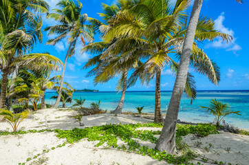 Paradise beach on island caye Carrie Bow Cay Field Station, Caribbean Sea, Belize. Tropical destination.
