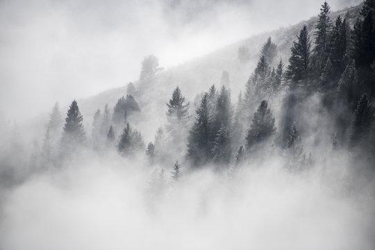 Dancing Fog Colorado