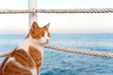 Cute red cat looking torward the sea sitting on pier