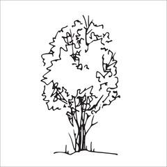 Shrub hand drawn sketch, freehand drawing