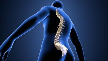 3d illustration of human body spinal bone
