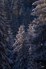 winter landscape in forest at sunset