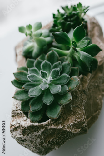 home indoor plants: Aloe cactus succulent plant  small