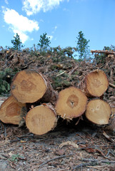Logging in the Black Hills, South Dakota