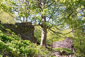 Des murs dans la nature