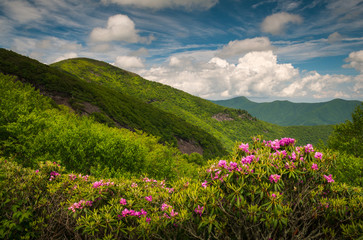 Asheville North Carolina Blue Ridge Parkway Spring Flowers Scenic Landscape