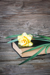 Vertical photo of a beautiful yellow flower lying on a book on a wooden background