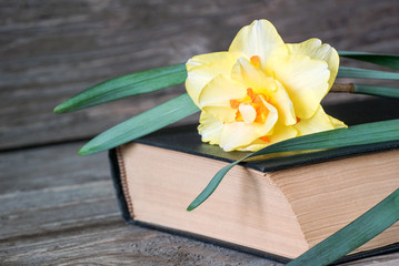 Photo of a closeup of a beautiful yellow flower lying on a book on a wooden background