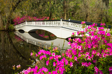 Charleston South Carolina Spring Flowers Blooming SC