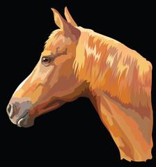 Colored Horse portrait-9