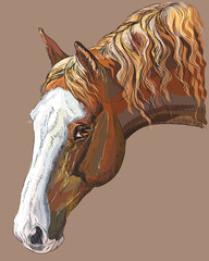 Colorful Horse portrait-4