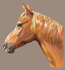 Colorful Horse portrait-9