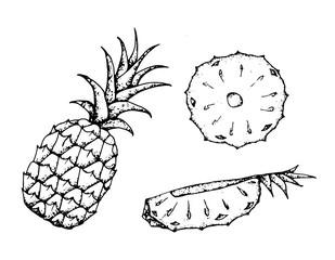 Black and white fruit sketch hand drawing isolated vector illustration
