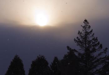 夕暮れ 木 空 雲 素材