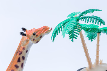 Giraffe toy eating having lunch of leaves on vegetation tree with white background