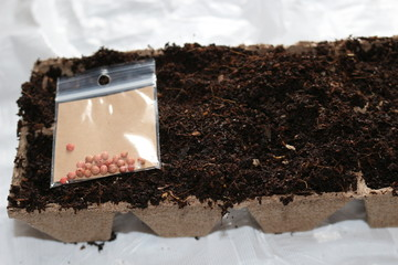 sowing seeds in spring in biodegradable peat pots