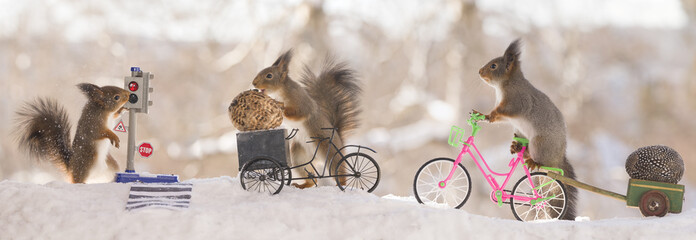 three red squirrels with an bike with eggs and crosswalk