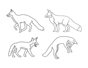 Fox outline