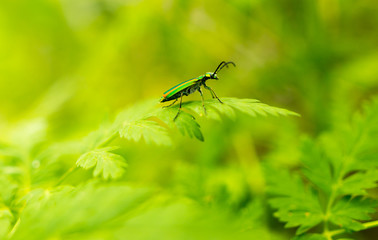 Beetle in green grass on nature