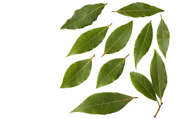 Fotobehang Natuur Laurel leaves isolated on a white background