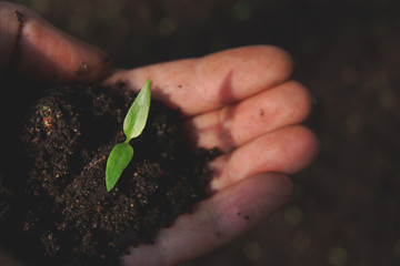 A small green sprout in the hand with earth
