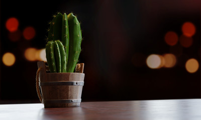 3d render illustration of a realistic green Cactus in a wooden bucket