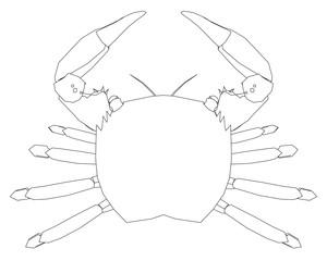The shape of the crab