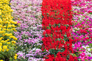 Natural background of colorful flowers blooming in garden under sunlight