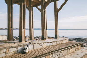 cat sitting near wooden construction at pier in Istanbul, Turkey