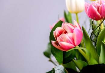 bouquet of white and pink tulips in front of bright  backgroun