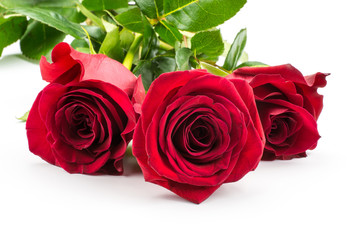 Three red roses isolated on white background bunch of fresh cut.