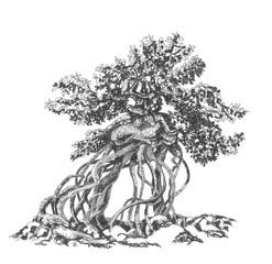 Бонсай - голые корни.