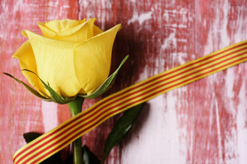 yellow rose and catalan flag