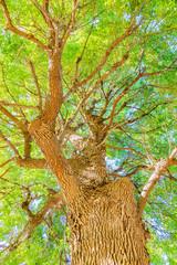 葉の茂った大木