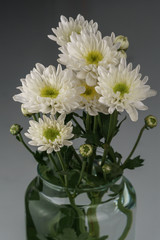 White Colored Daisy Flowers in vase