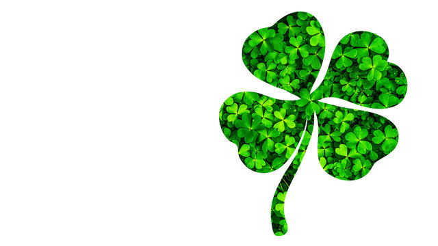 Beautiful St. Patrick's Day Shamrock or 4-Leaf Clover Outline with Small Clover Leaves Texture,   Isolated on White Background with Clipping Path or Selection Path Included.