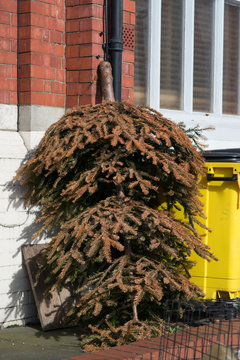 discarded Christmas tree left outside building upside down leaning against wall next to yellow dumpster