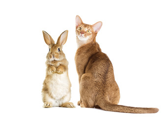 Wall Mural - cat and rabbit together on a white background