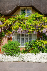 Traditional english thatched house with flower decoration in Southern England UK